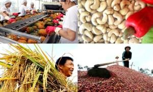 Infographics: Xuất khẩu 9 nhóm mặt hàng nông sản sang Trung Quốc tăng mạnh