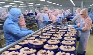 Quy định mới của EU về chứng thư đối với thủy sản xuất khẩu